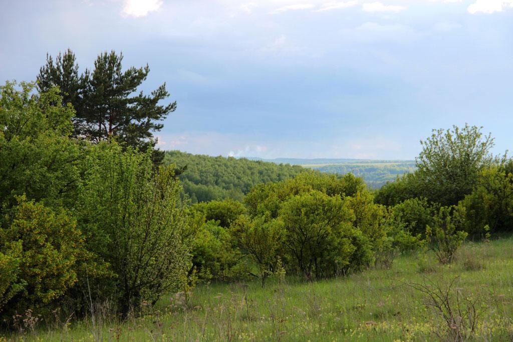 Бесчисленные луга, угоры и лесополосы - такова природа севера Тульской области
